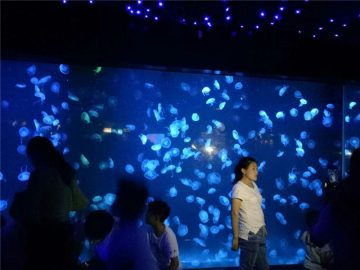 2018 acrilico meduse acquario serbatoio di vetro