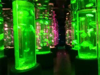 2018 fornitore di serbatoio meduse acrilico