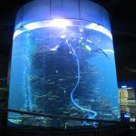 serbatoio in acrilico trasparente per grandi acquari o acquario