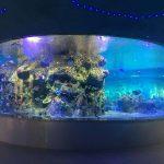 ciotole per pesci di scorta, acquari con serbatoi di vetro rotondi