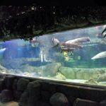 Pannelli acrilici spessi subacquei di progettazione di lusso su misura Finestra di vetro della finestra dell'acquario