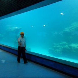 Pannello acrilico UV per parete per acquario / oceanario