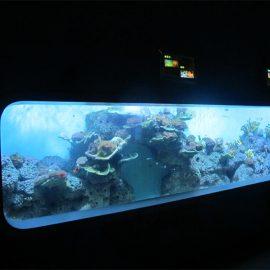 Acquario di pesce cilindrico trasparente acrilico colato artificiale / finestra di vista