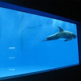 Grande finestra dell'acquario acrilico di grande qualità dell'acquario acrilico / stagno della finestra
