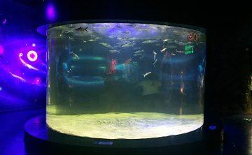 Serbatoio di pesce acrilico