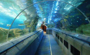 Tunnel acrilico