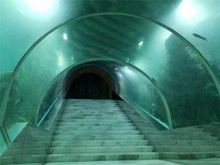 Prezzo del progetto dell'acquario tunnel acrilico