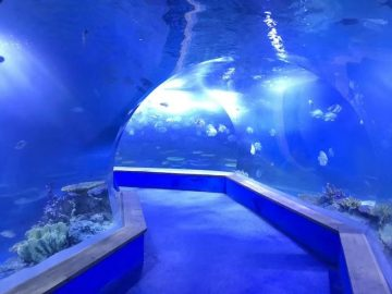 Clear pmma acrylic Grande tunnel di plastica dell'acquario