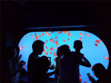 Serbatoio di meduse personalizzato di diverse dimensioni di forma