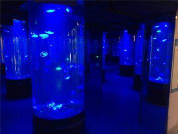 vetro acrilico dell'acquario delle meduse acriliche