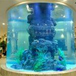 serbatoio di pesci di cristallo
