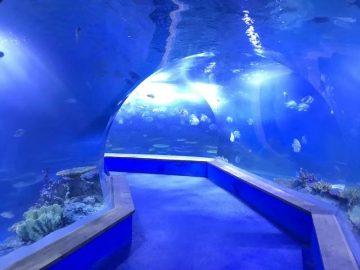 vetro acrilico trasparente Acquario Tunnel